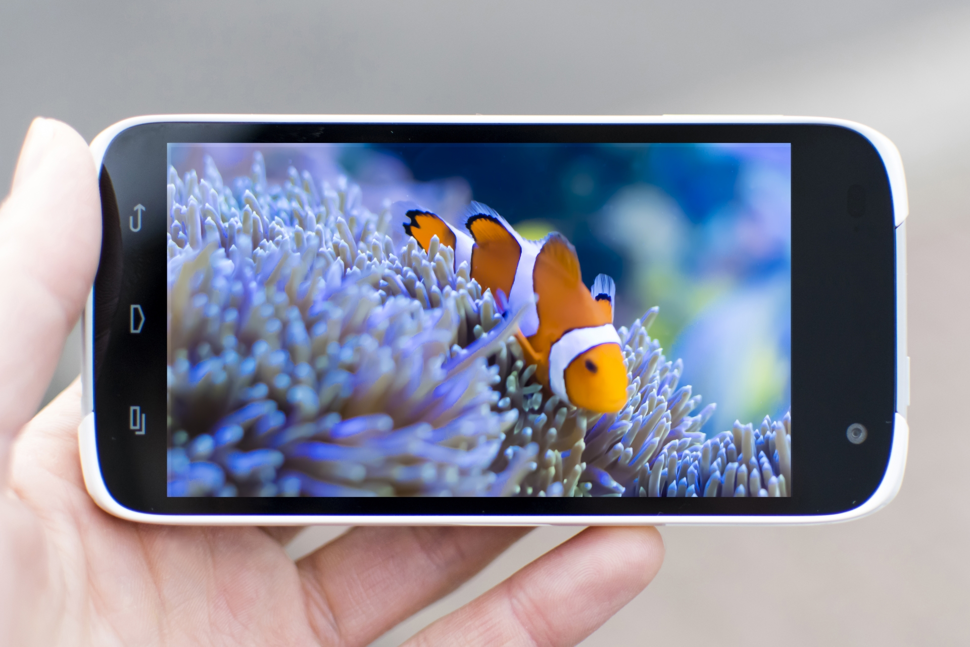iPhone・iPadでテレビ視聴|リアルタイムにワンセグ・フルセグを見る方法